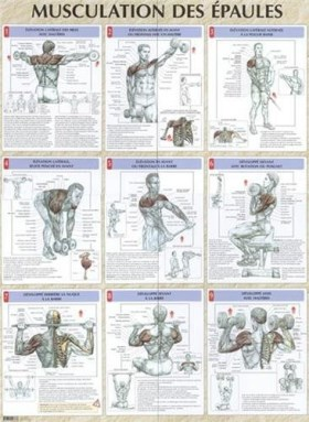 Entra nement fr d ric delavier for Guide musculation
